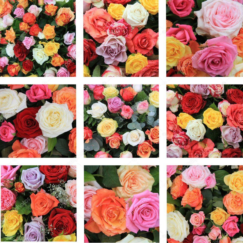Multicolor rose collage