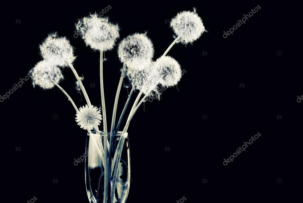 Bunch of dandelion seeds