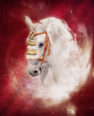 Expressive grey andalusian horse portrait