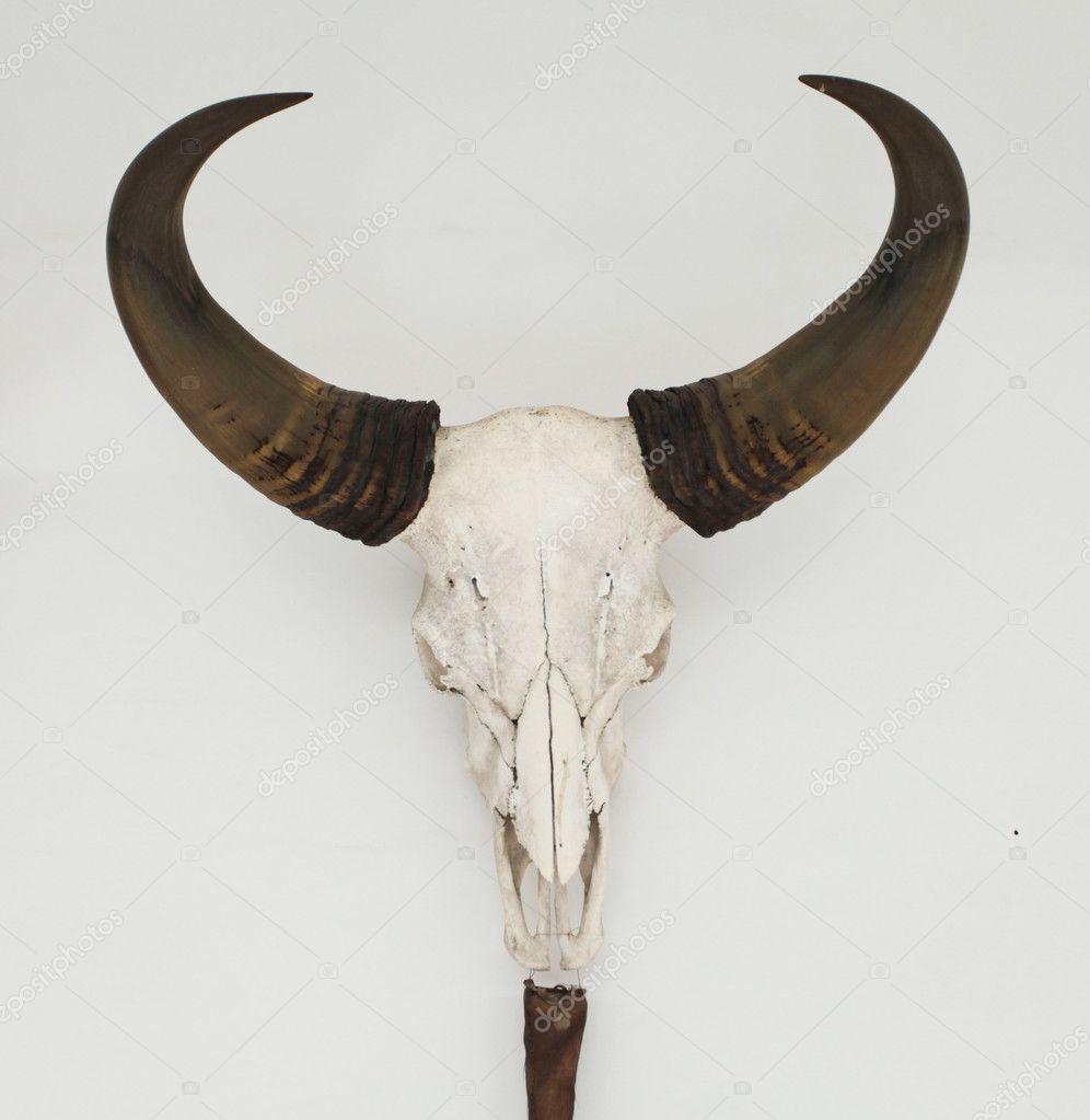 Schedel en hoorns stockfoto dmitroza 10312829 for Schedel hoorns