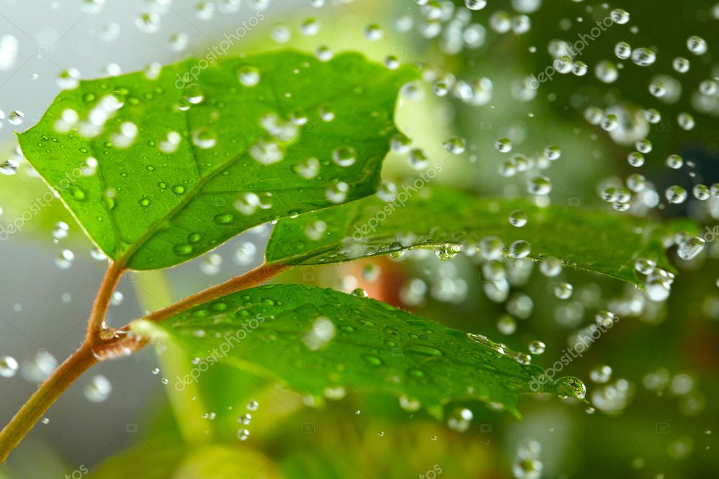 Green leaves in the rain