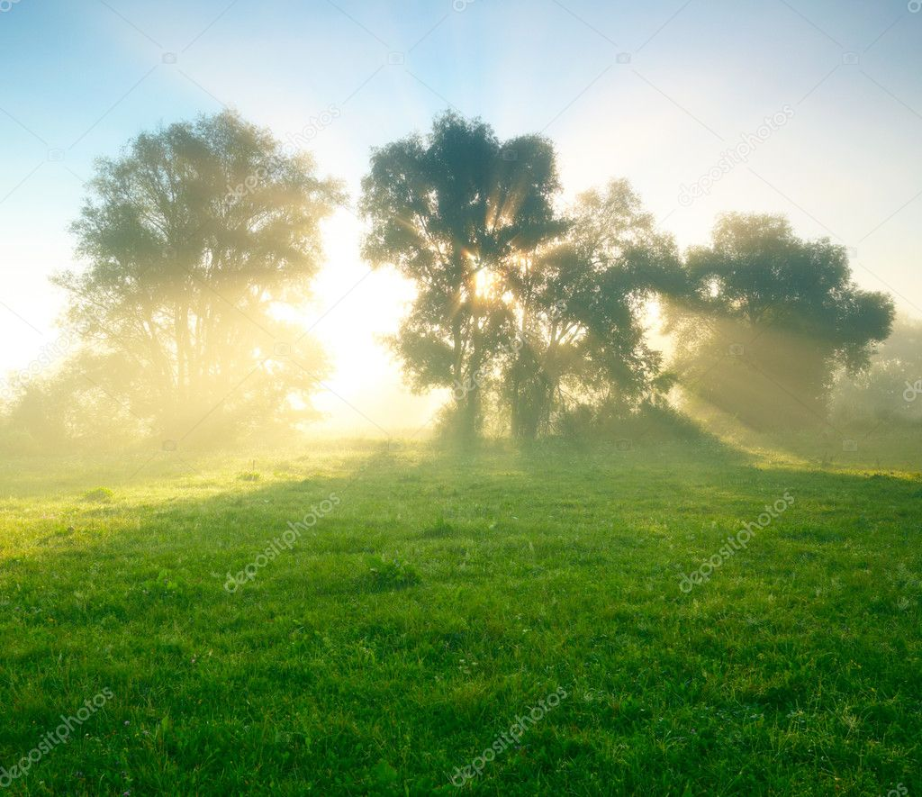 Foggy meadow at sunrise