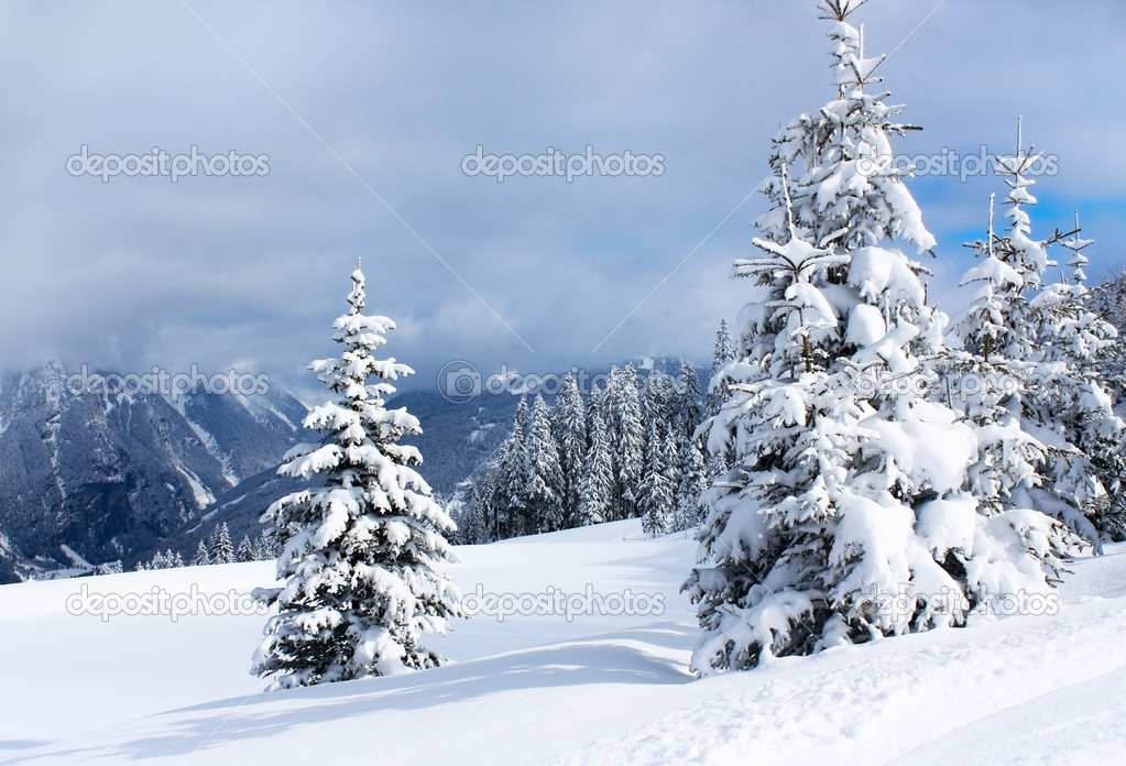 Winter trees in alp mountains