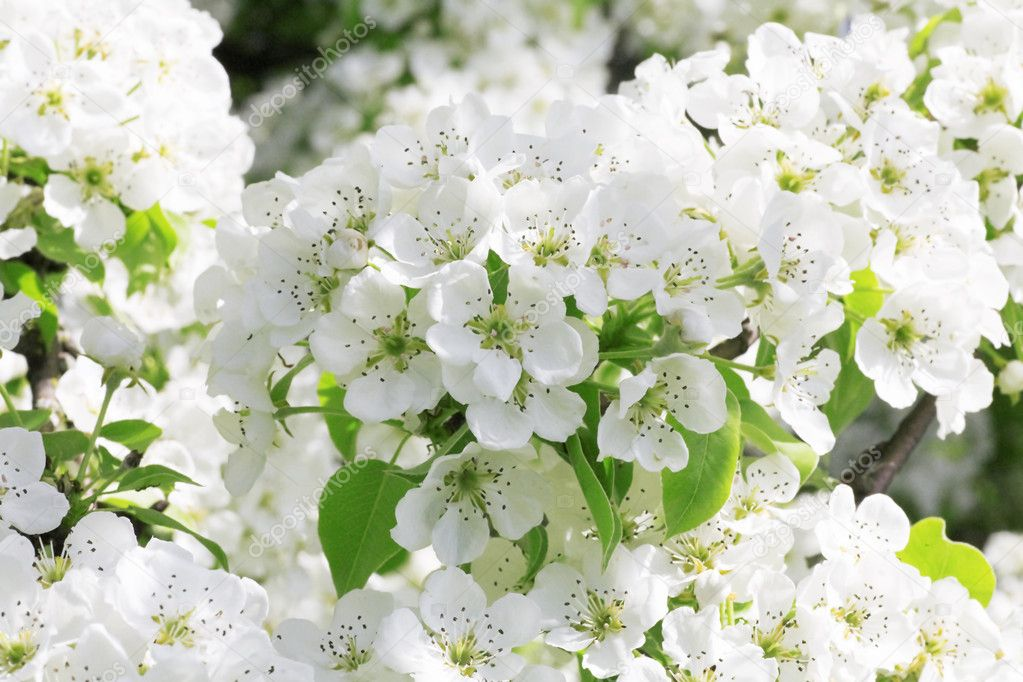 Gentle white flowers in a spring sunny day
