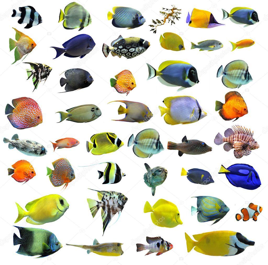 peces #hashtag