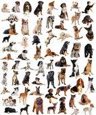 Fényképek csoport-ból kutyák