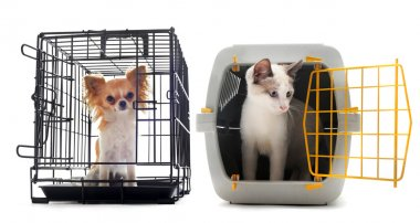 Chihuahua and cat in kennel
