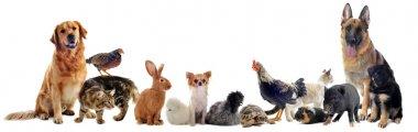 "Картина, постер, плакат, фотообои ""группа домашних животных"", артикул 9491244"