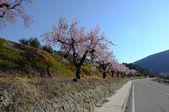 strada di primavera