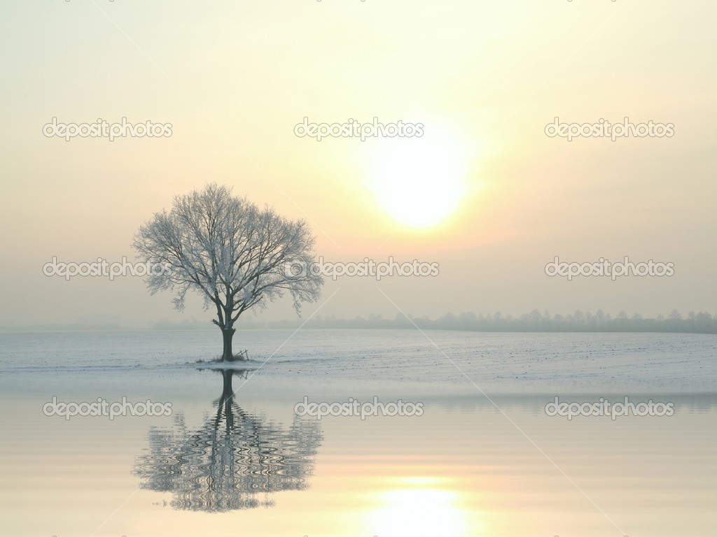 Winter landscape of frosted tree at sunrise