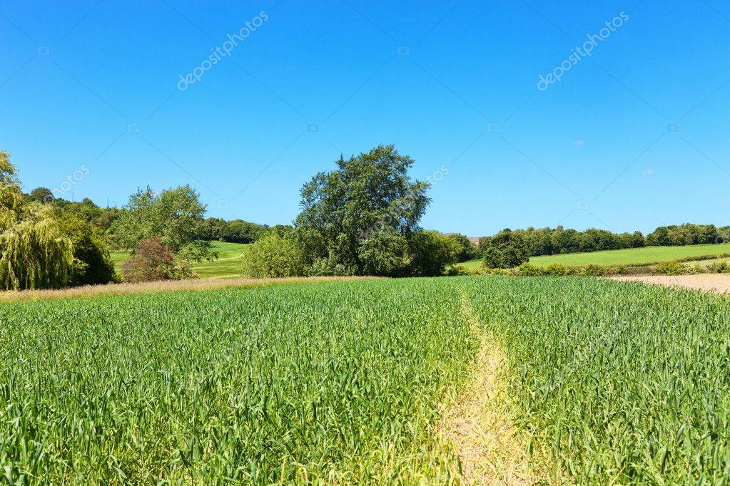 Paesaggio di campagna inglese con alberi campi cielo blu for Piani di campagna inglese