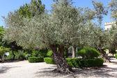 Photo Olive Garden in Emmaus