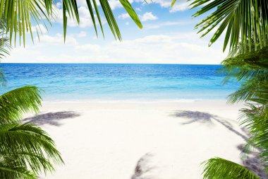 View of nice tropical beach with some palms around stock vector