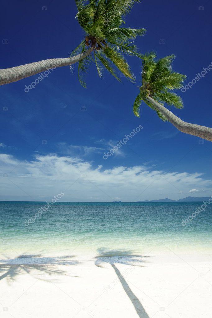 Two palmstwo palms