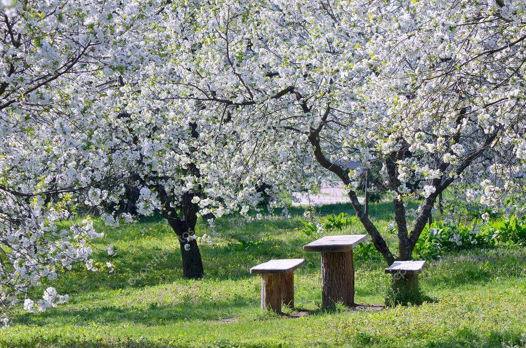 Цветущий сад — Стоковое фото