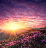 Fotografie jarní krajina s zamračená obloha a květina