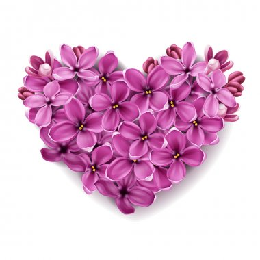 Heart from flowers of a lilac.
