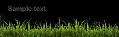 Green grass panorama isolated on black background. High resolution. 3D image
