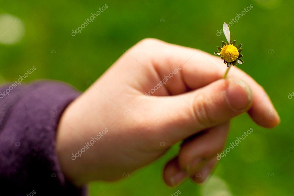 Цветок в руке картинки