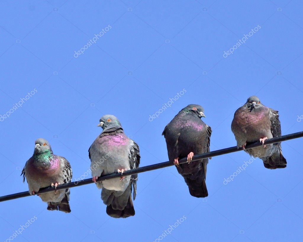 Vögel auf dem Drahtseil — Stockfoto © brm1949 #9247285