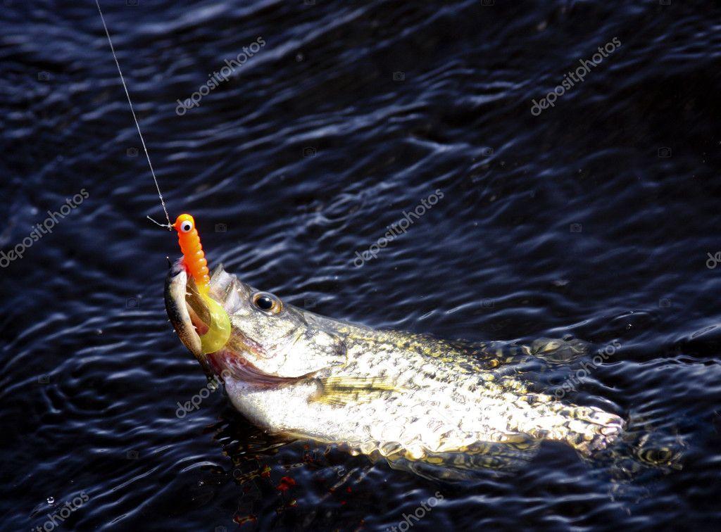 Podłączyć ryby
