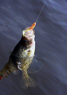 Hooked fish