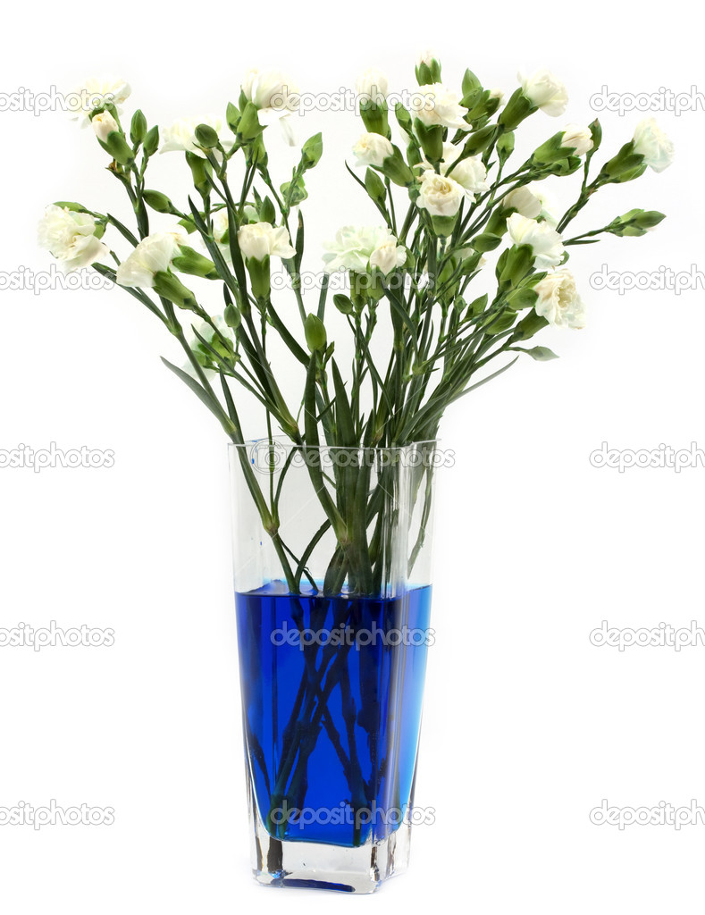 Making Blue Carnations Stock Photo Kavring 8029063