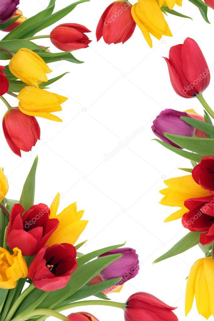 Tulip Flower Border — Stock Photo © marilyna #8510377Tulips Clipart Border