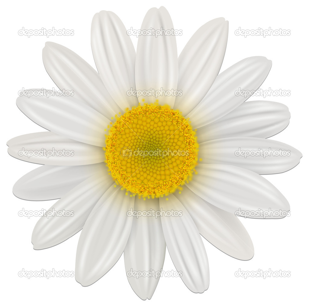 Daisy stock vectors royalty free daisy illustrations depositphotos daisy flower stock vector izmirmasajfo