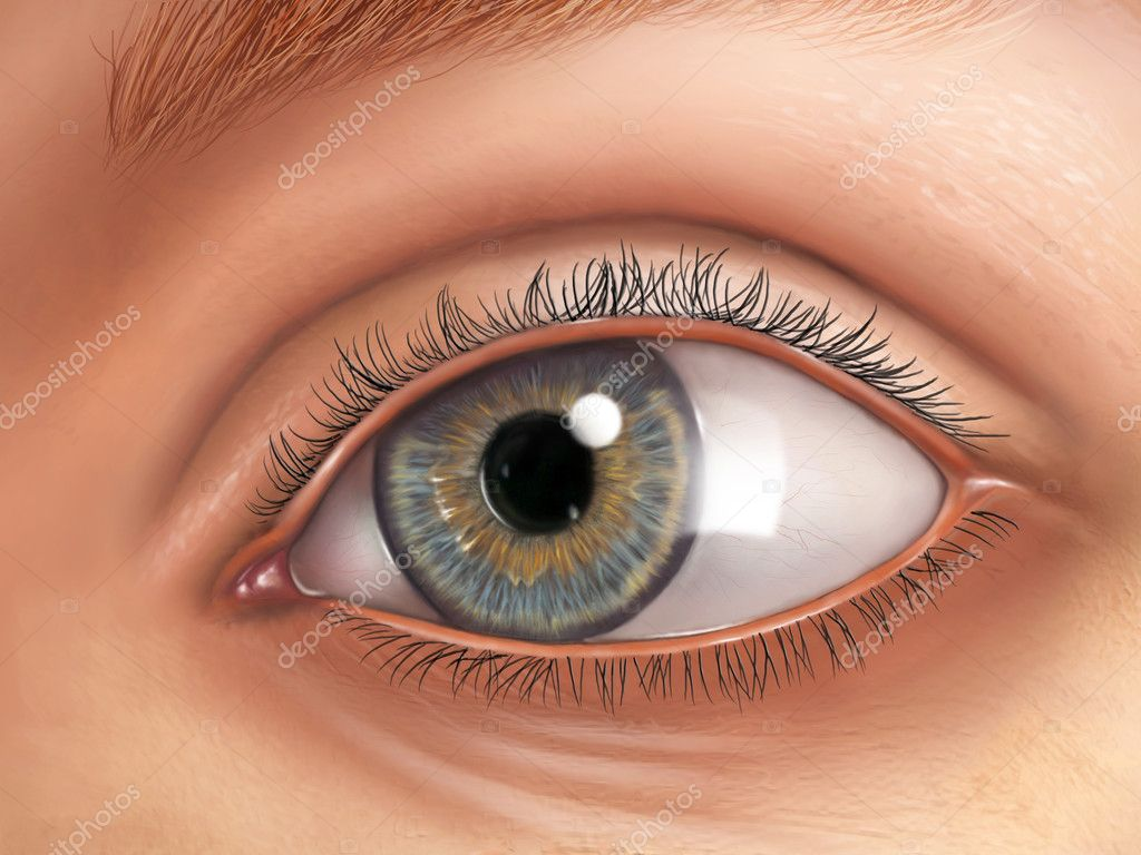 Eye anatomy — Stock Photo © Andreus #10153558