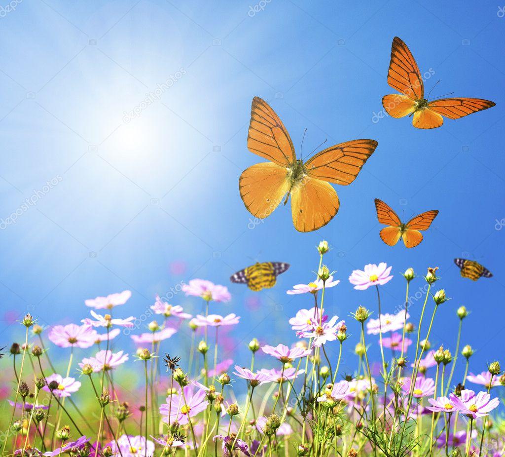 Mazzo di fiori di primavera nel prato — Foto Stock © yuliang11 ...