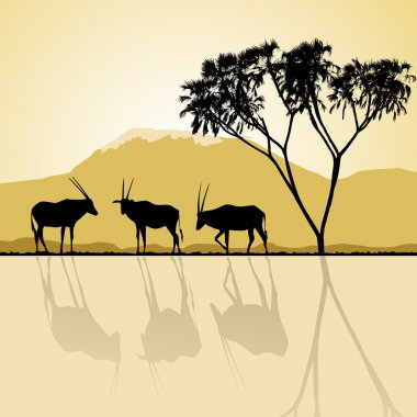 African landscape flora and fauna in sunset time with antelopes.