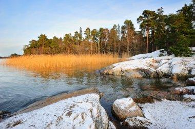 Reed landscape