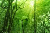 Fotografia foresta muschioso