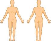 mužská anatomie stojící
