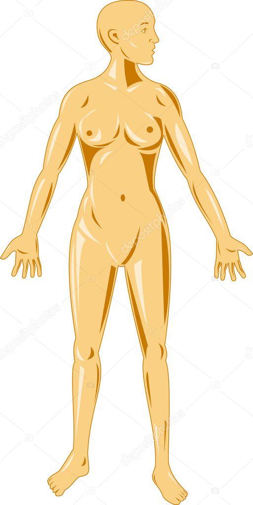 pie de anatomía femenina — Foto de stock © patrimonio #8910858