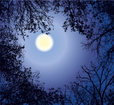 Vector framework from the weaved branches of trees against the night sky in a full moon stock vector