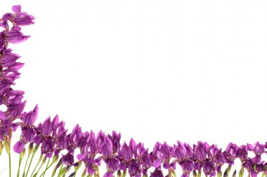 Frame from flowers.