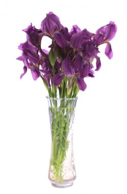 Irises in a vase, isolated.