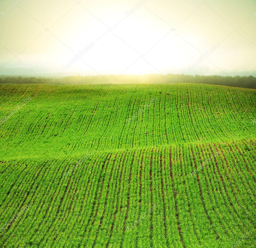 Fog in field