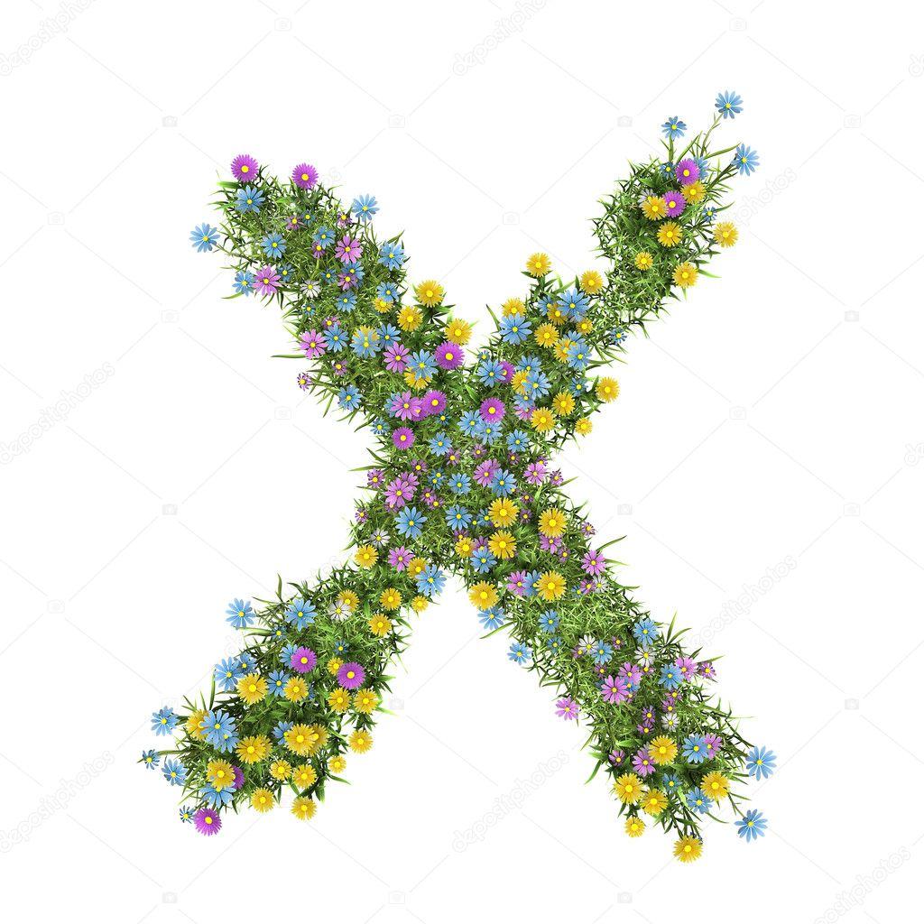 Litera X Alfabet Kwiat Na Białym Tle Zdjęcie Stockowe Digiart