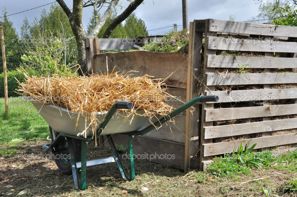 Compost bin and wheelbarrow