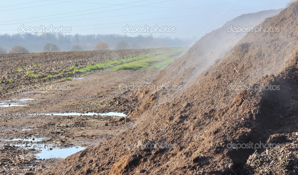 Pile of manure deposited in a field