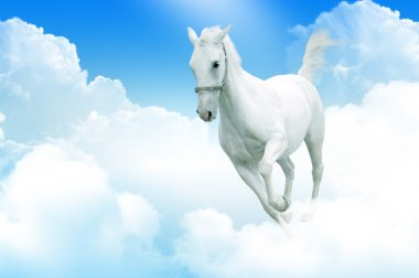 White horse in motion, in the sky
