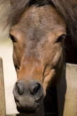 Photo Brown horse