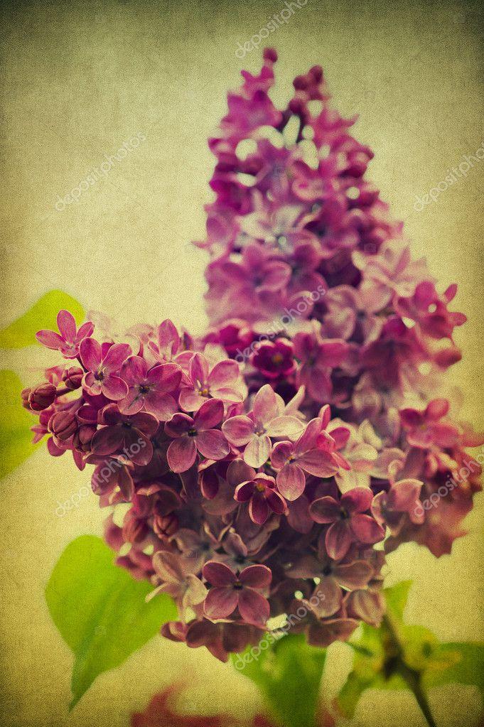 Grunge lilac flower