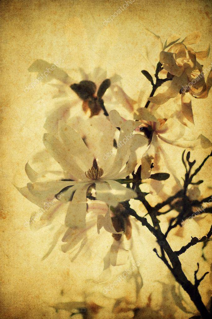 Grunge magnolia flowers
