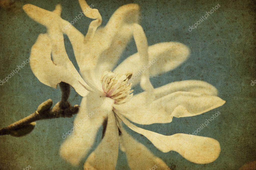 Grunge magnolia flower