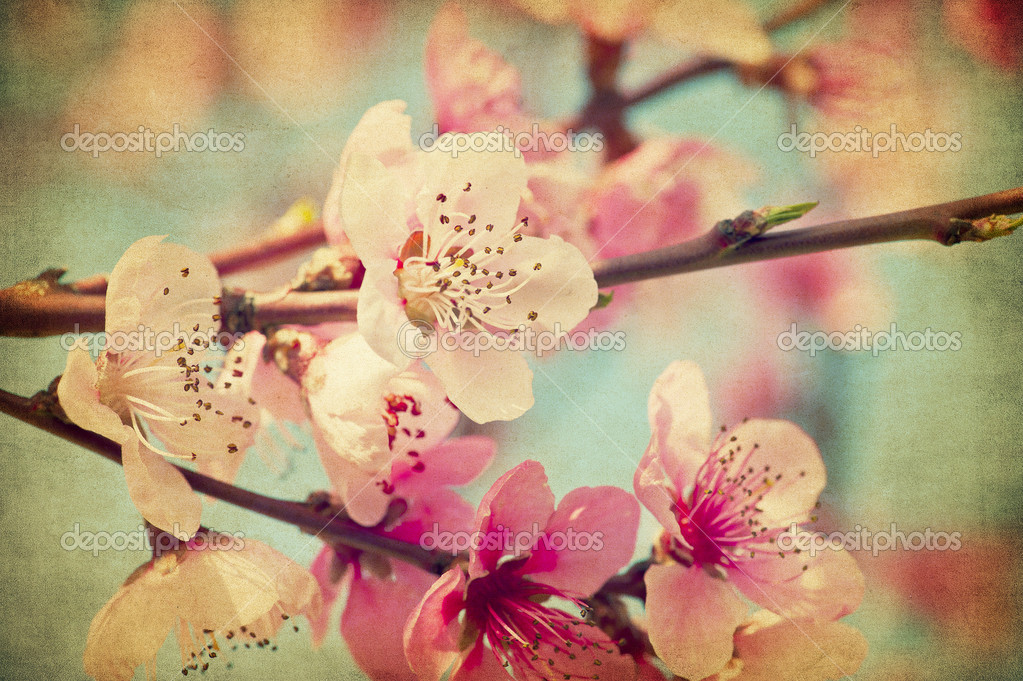 Grunge peach flowers