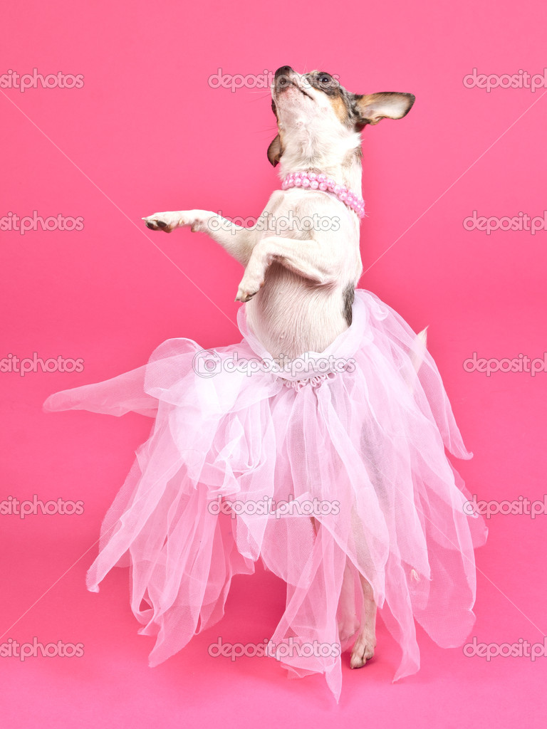 perro con esponjoso vestido de baile — Fotos de Stock © vitalytitov ...